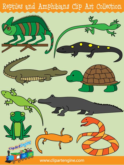 THE DISTINCTIVE CHARACTERISTICS DIFFERENCES BETWEEN AMPHIBIANS ...