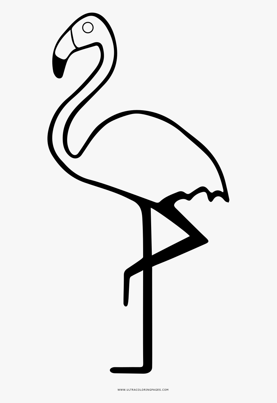 Flamingo Coloring Page Greater Flamingo Free Transparent Clipart Clipartkey