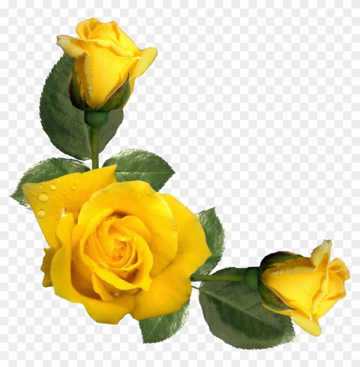 Yellow Rose Images With Quotes Wallpapergoodco