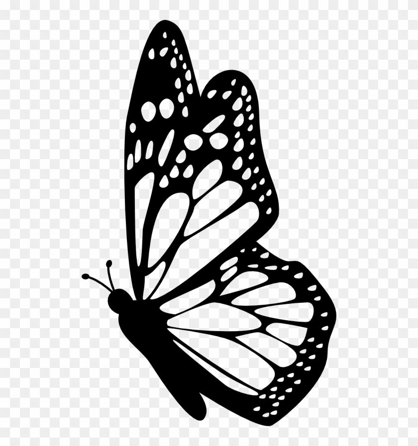 Profile Clipart Butterfly Pencil And In Color Profile Butterfly Drawing Side View Free Transparent Png Clipart Images Download
