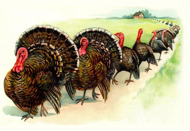 Turkey Parade Thanksgiving Graphic