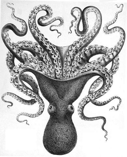 Art Octopus Clip Vintage