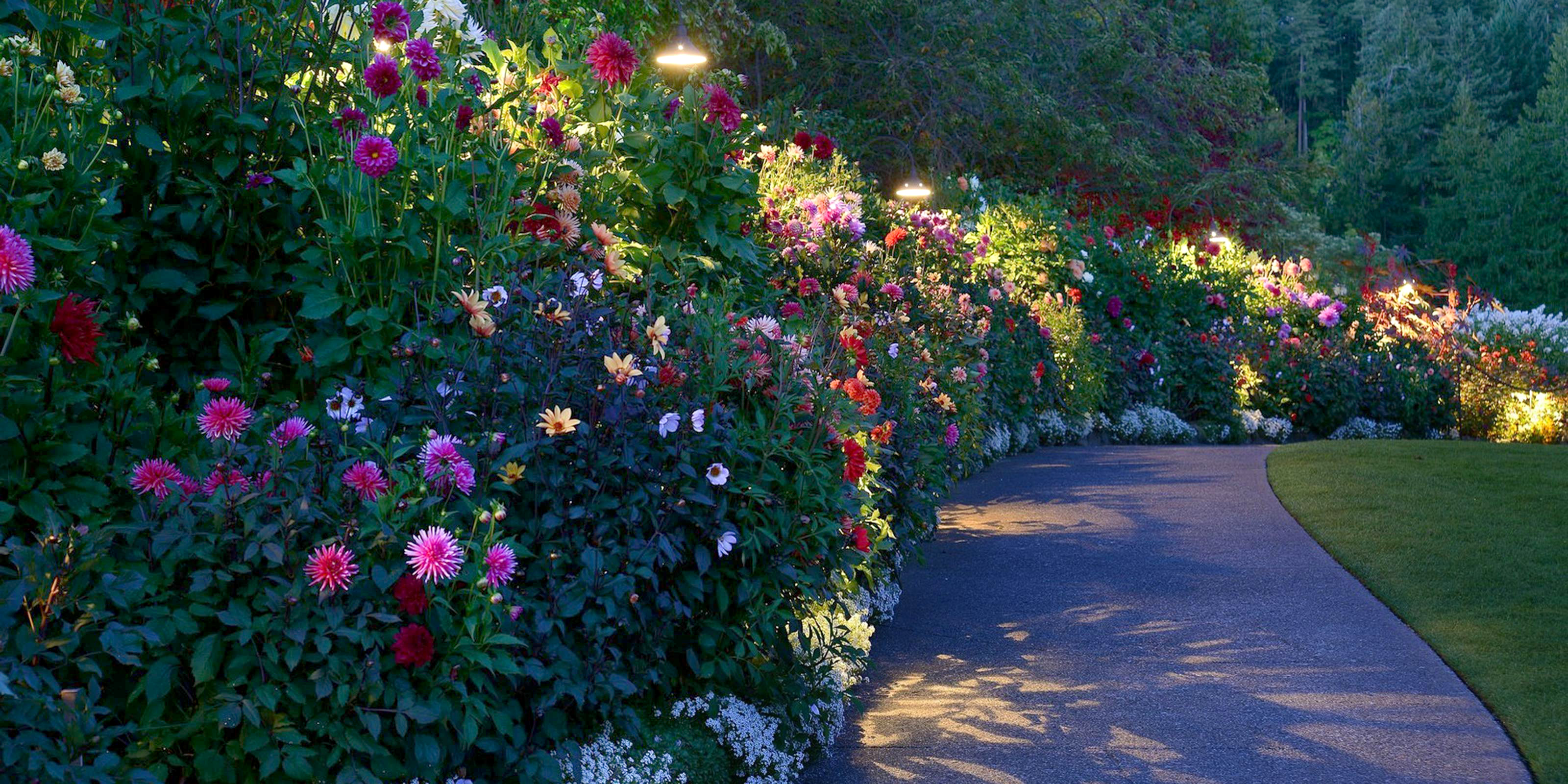 Butchart Gardens Night Illuminations Package From Seattle