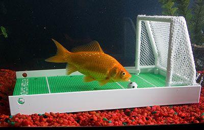 acda-r2-fish-training-school