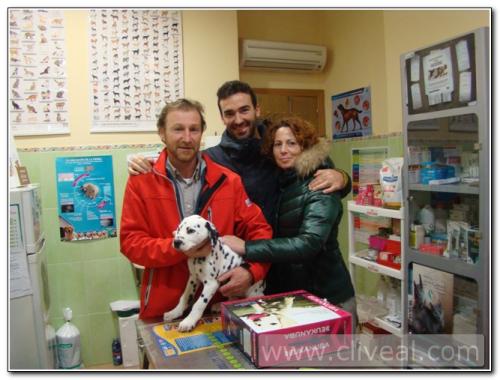 cachorro-dalmata-en-clinica-veterinaria-almendralejo