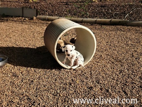 cachorro dentro tubo