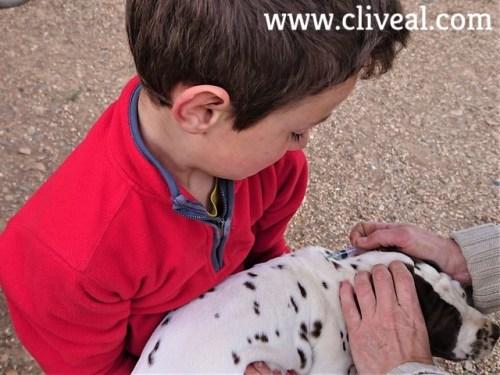 cachorro vacunado