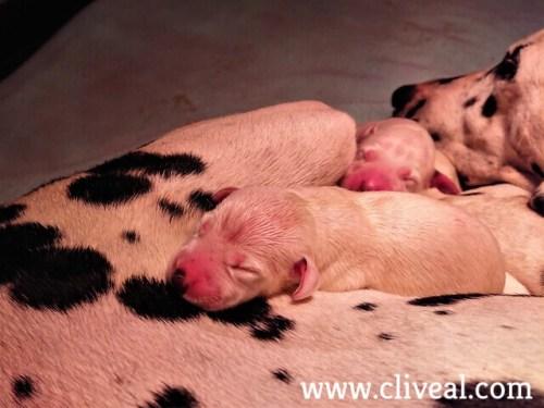 cachorros neonatos