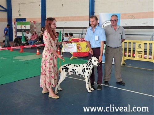 dalmata macho dog show