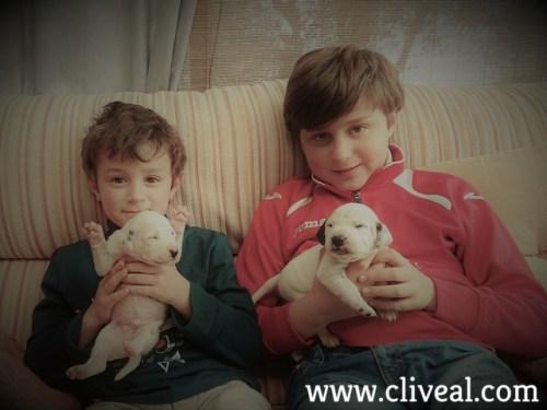 niños con cachorros dálmata