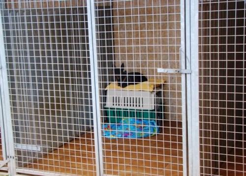 perro alojado en la residencia canina cliveal
