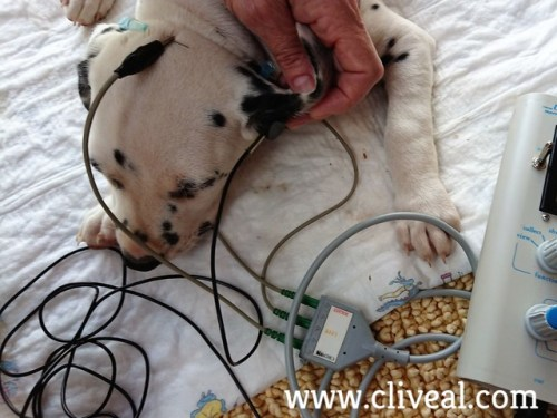 test baer perro cachorro