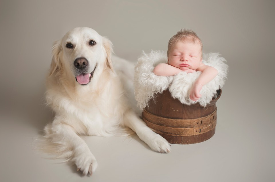 The Babymoon Photographer, fur baby, dallas newborn photographer, newborn photo shoot, CLJ Photography