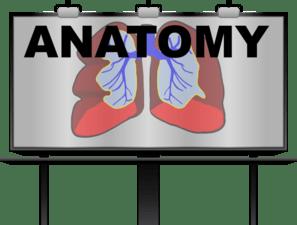 lungs and pulmonary medicine