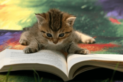 Image result for cat with book