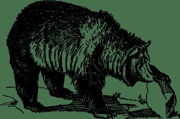 Grizzly Bear Clip Art at Clker.com - vector clip art ... (600 x 398 Pixel)