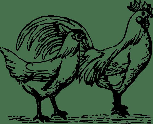 Poultry Clip Art At Vector Clip Art Online
