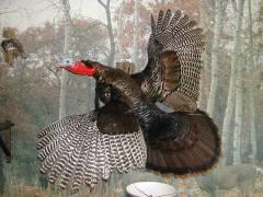 _flying_turkey