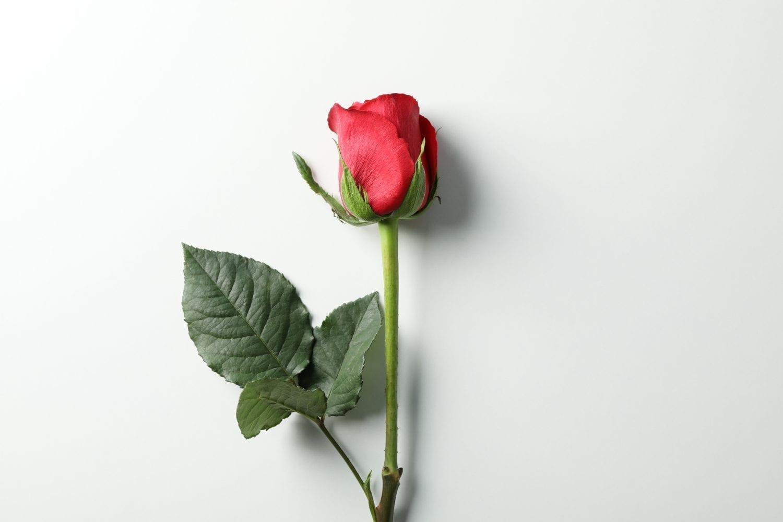 rose planlægning af konfirmation