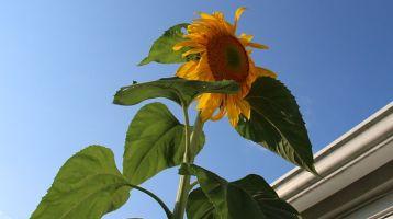 4 Ways to Grow an Organic Garden