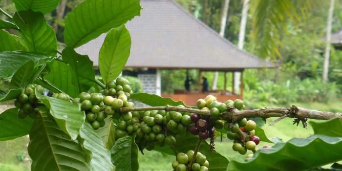 Clove Tree Hill Villas Bali Luxury Accommodation