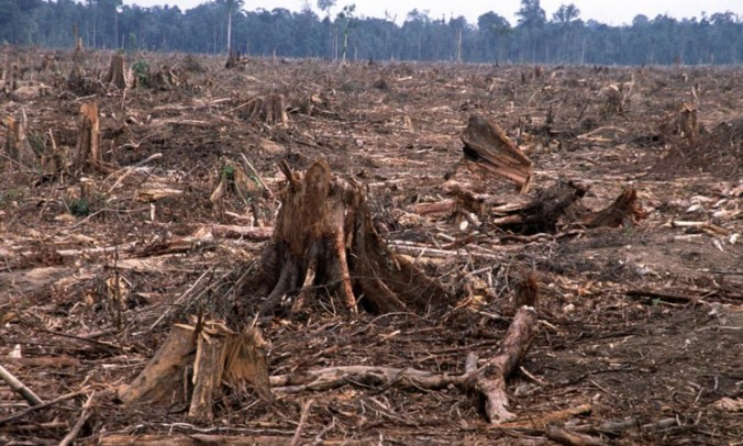 Palm oil destroys the rainforest