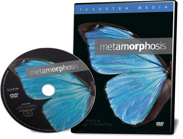 butterflies and metamorphosis