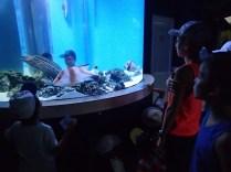 Fascinati de lumea apelor