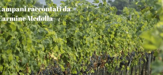 Vini Campani di Carmine Medolla