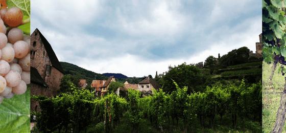 Strada del Vino Alsazia una passeggiata fra i Vigneti Francesi