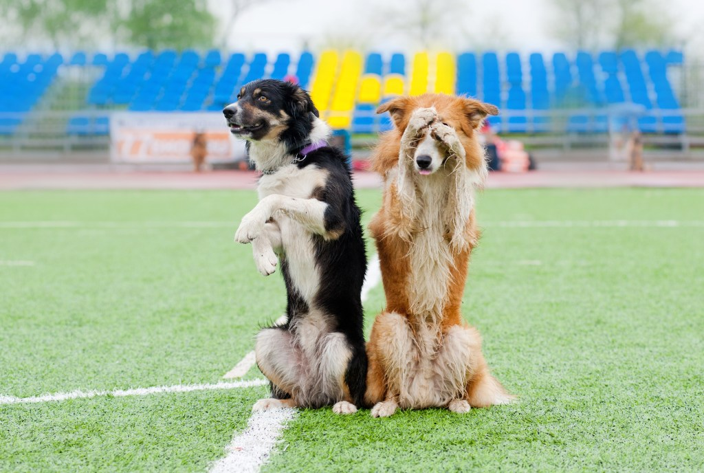 fun dog tricks trick training at club-doggie arizona