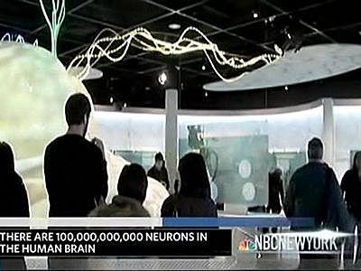 amnh-brain-nbc