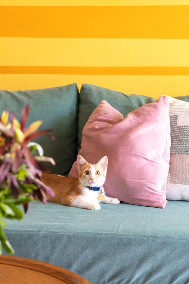kitten on IKEA hack sofa with mural backdrop