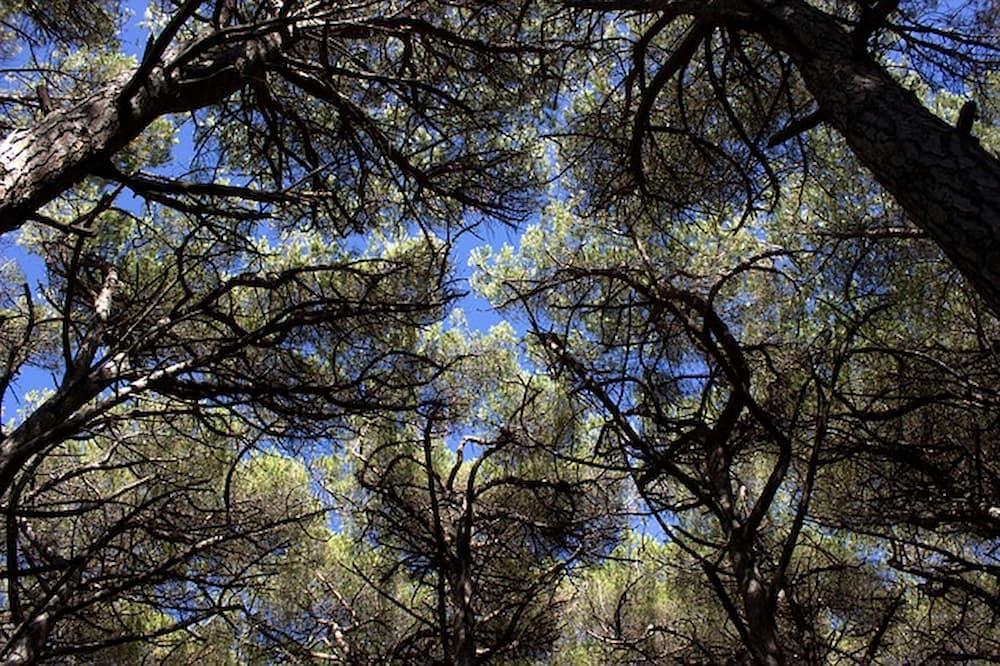 pineta-marco-malvaldi-primavera