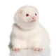 ferret-do-artico-albino-branco
