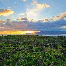 640px-Landscape_of_the_Pico_Island_Vineyard_Culture