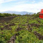 640px-Museu_do_Vinho_do_Pico,_curraletas_de_vinha_1_Lagido_da_Madalena,_Concelho_da_Madalena,_ilha_do_Pico,_Açores,_Portugal