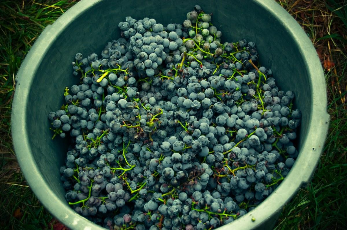 Vinho Verde - Vinificação