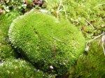 Musgo Aroma herbáceo e vegetal que recorda o do musgo que cresce nas árvores.