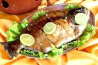 peixes gordos3