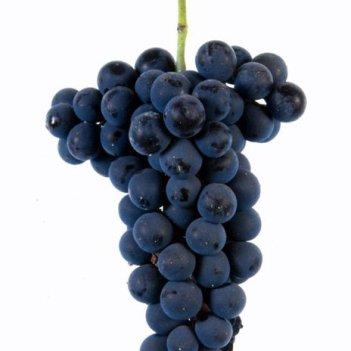 vinhão