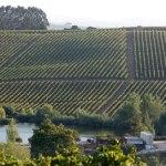 vinhos-de-lisboa-entre-os-melhores-de-portugal-2012
