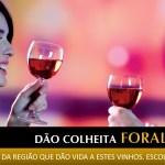 vinhos_colheita