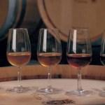 Evolução do Vinho de Carcavelos em várias fases.