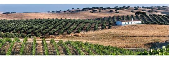 Vinhos Alentejanos e Alentejo estão na moda