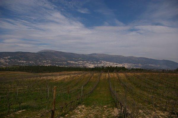 Portugal é um país muito diverso que não se resume às regiões usualmente faldas, como Douro ou Alentejo. O Portugal vinícola é muito mais. Um mosaico, um mármore de grande diversidade e aí reside a beleza! Em cada raio de 5 km encontra-se uma coisa diferente, um estilo ou um know-how. Muito diferente da monotonia ou uniformidade que se verifica em muitos países, onde se palmam quilómetros e vê-se e saboreia-se e sabe-nos tudo ao mesmo.