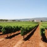 No início do Século VIII outras vagas de invasores se seguiram, desta vez vindas do Sul. Com a influência árabe começava um novo período para a vitivinicultura Ibérica.