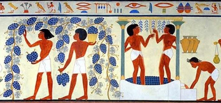 Sabia que Cleópatra adorava vinho de Moscatel  5