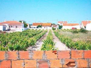 A vinha ainda resiste à construção…
