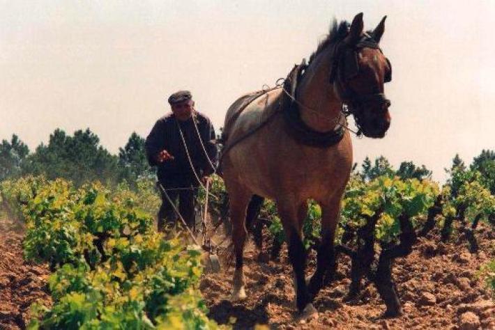 Um passado recente… ...quando a viticultura era a tempo completo